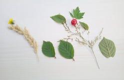 Naturalny skład rośliny na lekkim tle Zdjęcie Royalty Free