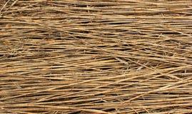 Naturalny suchy trzcinowy tło obrazy stock