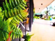 naturalny tła pojęcie Sztuczni paprociowi liście byli wystrojem obraz stock