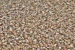 Naturalny tło - morze skorupy Fotografia Royalty Free