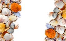 Naturalny tło seashells fotografia stock