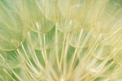 Naturalny tło w plamy zakończenia koloru żółtego i zieleni kolorach Zdjęcie Stock