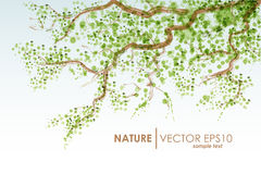Naturalny tło Wektorowy grunge green gałęziasta zostaw drzewa Fotografia Stock