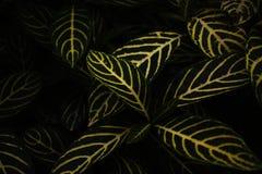 Naturalny tło z pięknymi tropikalnymi liści wzorami zdjęcia stock