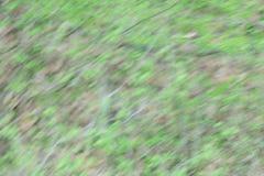Naturalny tło Zamazani abstraktów liście na gałąź Fotografia Royalty Free