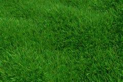 Naturalny trawy tekstury wzoru tło Odgórnego widoku trawiasty gazon dla środowiskowego tła świadczenia 3 d ilustracji