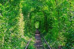 Naturalny tunel tworzył od drzew wzdłuż kolei Obrazy Royalty Free