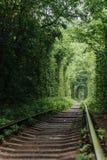 Naturalny tunel wyłania się od drzew miłość Fotografia Stock