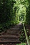 Naturalny tunel wyłania się od drzew miłość Obrazy Royalty Free