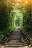Naturalny tunel wyłania się od drzew miłość Obrazy Stock