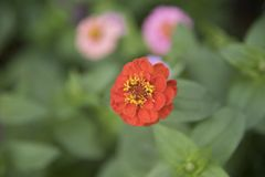 Naturalny widok kwiaty, naturalni krajobrazy Zdjęcie Royalty Free