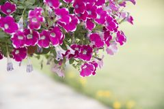 Naturalny widok kwiaty, naturalni krajobrazy Obrazy Royalty Free