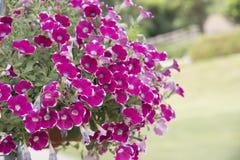 Naturalny widok kwiaty, naturalni krajobrazy Zdjęcie Stock
