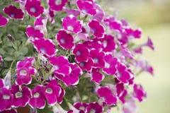 Naturalny widok kwiaty, naturalni krajobrazy Fotografia Royalty Free