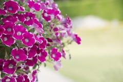 Naturalny widok kwiaty, naturalni krajobrazy Obrazy Stock