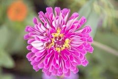 Naturalny widok kwiaty, naturalni krajobrazy Obraz Stock