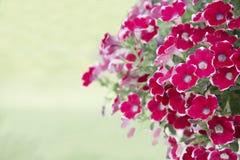 Naturalny widok kwiaty, naturalni krajobrazy Zdjęcia Stock