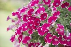 Naturalny widok kwiaty, naturalni krajobrazy Obraz Royalty Free
