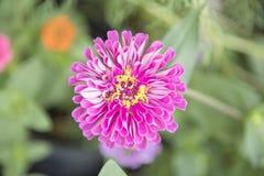 Naturalny widok kwiaty, naturalni krajobrazy Zdjęcia Royalty Free