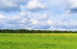 Naturalny wiejski tło z bujny zieleni kwiaciastymi łąkami, bryg Zdjęcie Royalty Free