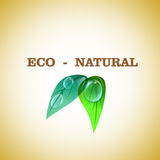 naturalny życiorys projekt Zdjęcie Stock