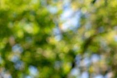 Naturalny zamazany tło liście drzewa i niebieskie niebo z skutkiem przebijanie Piękny kreatywnie zdjęcie royalty free