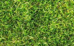 Naturalny zielonej trawy tło Zielonej trawy pola fotografii tło Wiosna sztandar świeża zielona trawa Zdjęcie Royalty Free