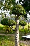 Naturalny zielony drzewny kształt Zdjęcie Stock