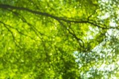 Naturalny zielony Drzewny tło, Bokeh Obrazy Stock