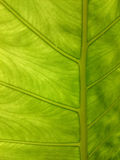 naturalny zielony tło liść Świeży lato lub wiosna wzór B Obrazy Stock