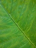 naturalny zielony tło liść Świeży lato lub wiosna wzór d Zdjęcie Royalty Free