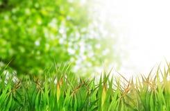 Naturalny zielony tło z selekcyjną ostrością Obrazy Royalty Free