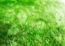 Naturalny zielony tło Obrazy Royalty Free