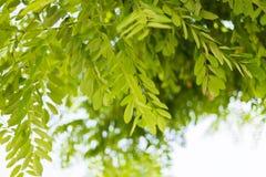 Naturalny zielony t?o z selekcyjn? ostro?ci? i plam?, ekologia, ?wie?y tapetowy poj?cie obrazy royalty free