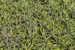 Naturan Green Coastal Vegetation Patterns and Textures Backgroun Royalty Free Stock Image