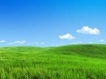 Naturansammlung - grüne Wiesenschablone Stockfoto