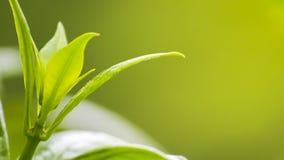 Naturansicht des Grüns verlässt unter der Sonne Natürlicher grüner Baum wir lizenzfreie stockbilder