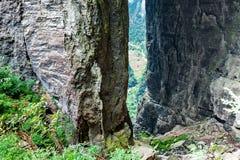 Naturarv för Wulong Karstvärld, Chongqing, Kina Royaltyfri Bild