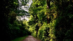Naturbäume Stockfoto