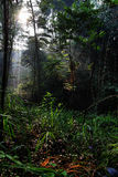 Naturbüsche mit Sonnenlicht Stockbild