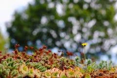 Naturbakgrund arkivfoton