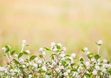 Naturbakgrund Fotografering för Bildbyråer