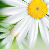 Naturbakgrund Royaltyfri Fotografi