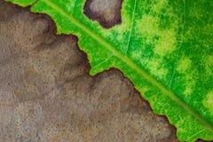 Naturbakgrund av bladtextur Fotografering för Bildbyråer