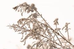Naturbakgrund av frost täckte växter royaltyfri fotografi