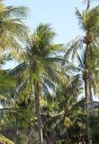 Naturbakgrund av palmträdskogen royaltyfri foto