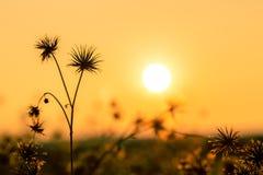 Naturbakgrund blommar in på orange solnedgång Fotografering för Bildbyråer