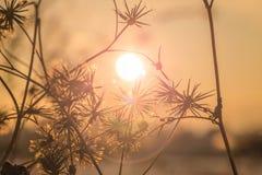 Naturbakgrund blommar in på orange solnedgång Arkivfoto