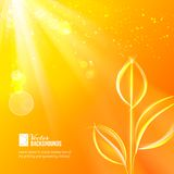 Naturbakgrund för sommardesign Arkivfoton