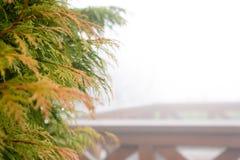 Naturbakgrund i den Alishan nationalparken, Taiwan på en våt och dimmig morgon Royaltyfri Foto
